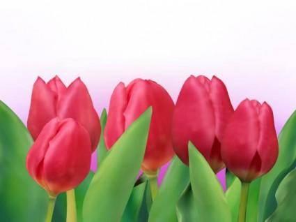 free vector Bright tulip 01 vector