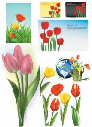 free vector Tulip vector