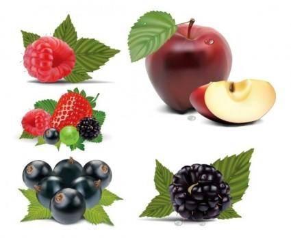 free vector Fruits vector