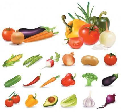 free vector Vegetables vector