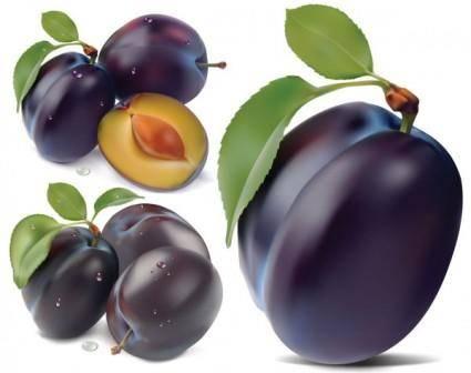 free vector Purple plum vector