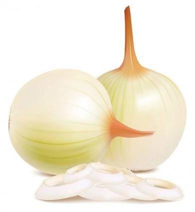 free vector Onion vector