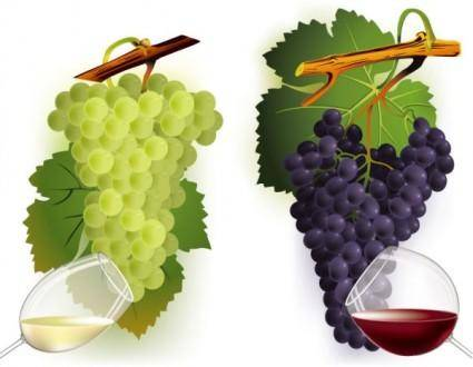 free vector Wine and grapes vector 2