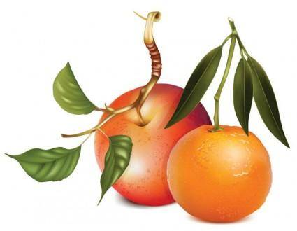 Apples and oranges vector