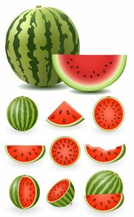 Watermelon clip art 5351