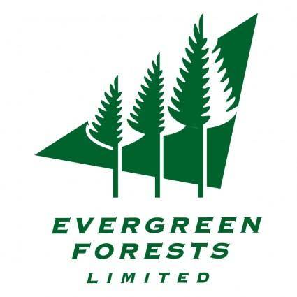 free vector Evergreen forests