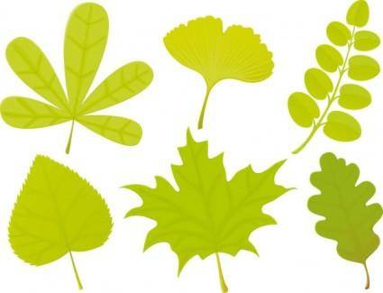 free vector A variety of leaf forms 04 vector