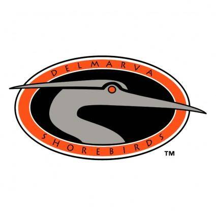 Delmarva shorebirds 0