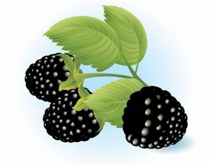 Free Dewberries Vector Illustration