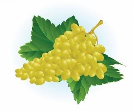 free vector Free Grape Vector Illustration