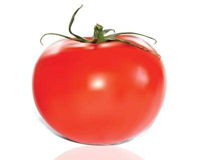free vector Tomato Vector
