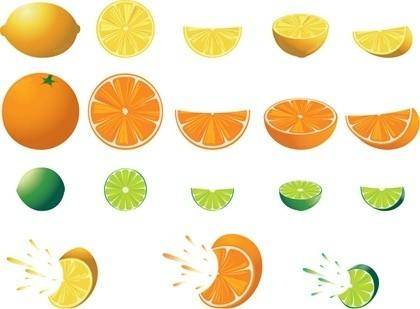 Free Citrus Fruit Vector