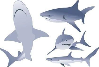 Free Vector Shark Illustrations