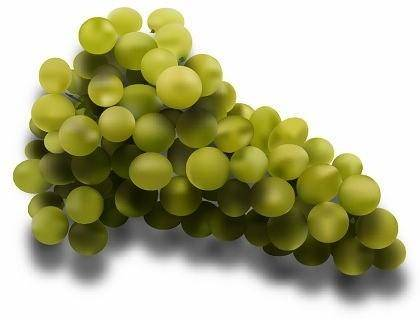 free vector Free lifelike portrait Grapes Vector
