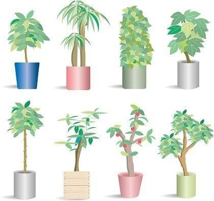 66 Potted Plants Vector