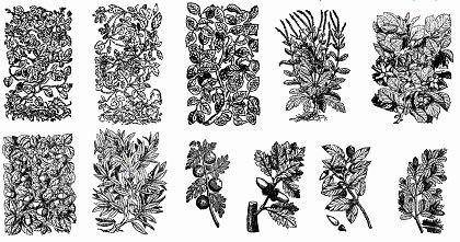 free vector 11 Old Plant Engravings Vector