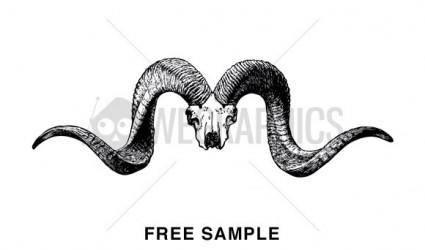 free vector Animal Skull Vector