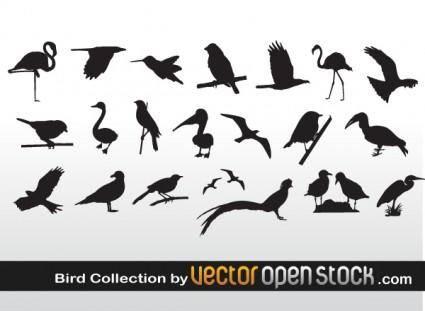 free vector Bird Collection