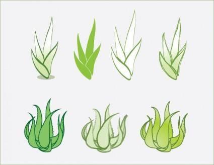 free vector Aloe vector
