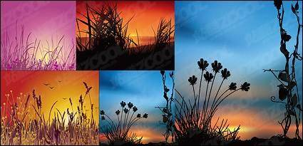 Sunset scenery vector material
