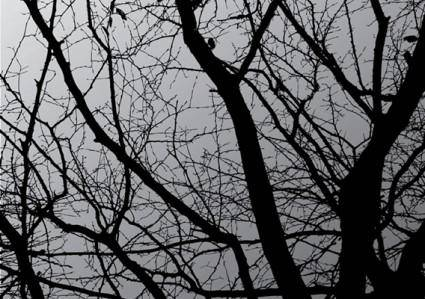 free vector Dark Tree
