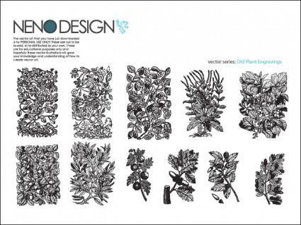 free vector Old Plant Engravings