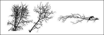 free vector Withered branches of the material
