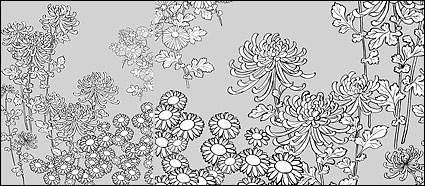 Vector line drawing of flowers-27(Wild chrysanthemum)