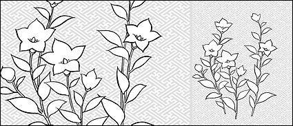 Vector line drawing of flowers-28(Campanulaceae)