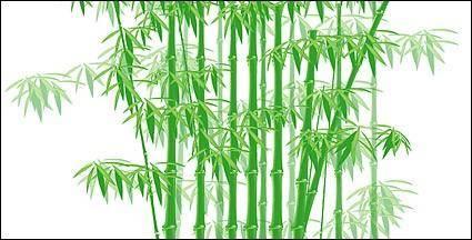 free vector The green bamboo vector material