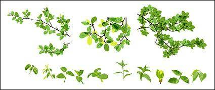 free vector Vector material leaves of spring
