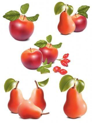 free vector Apple and pear ultrarealistic vector