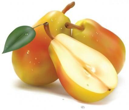 Realistic fruit 04 vector