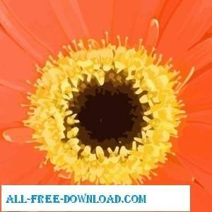 free vector Orange Flower