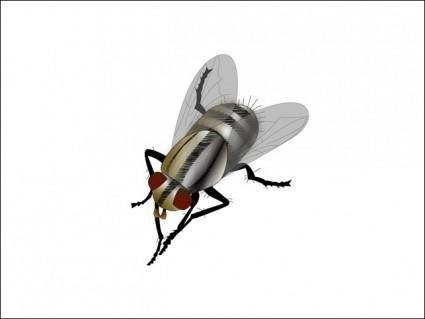 free vector Fly Vector