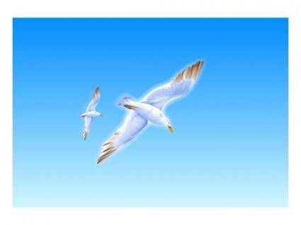 free vector Exquisite seagull vector