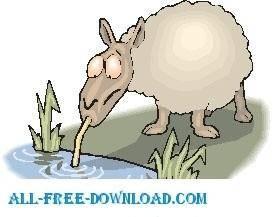 free vector Sheep Drinking