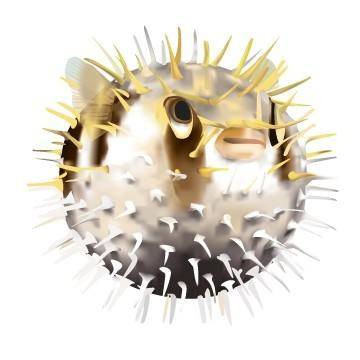 Pufferfish Vector