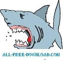 Shark 23