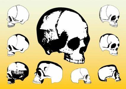free vector Free Skulls Vector Packs