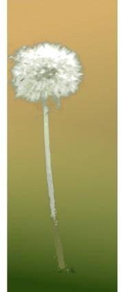 Pusteblume - dandelion clock
