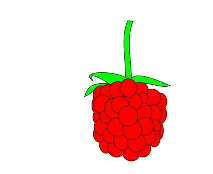 free vector Simple raspberry
