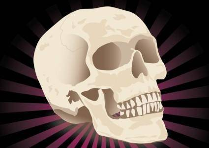 free vector Free Realistic Skull Vector