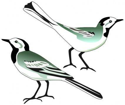 free vector White Wagtail