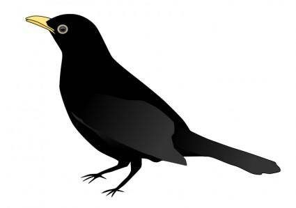 free vector Blackbird