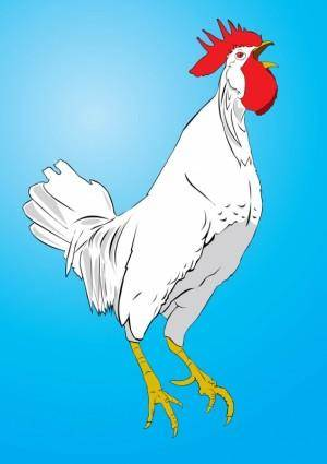 free vector Chicken Vector