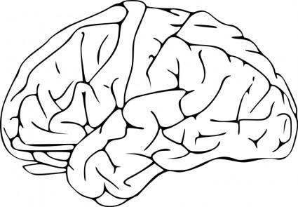 free vector Brain 03