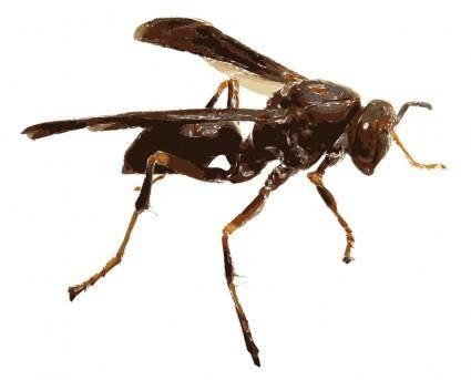 Wasp 16c
