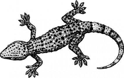free vector Gecko