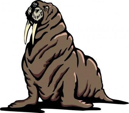 Walrus 2